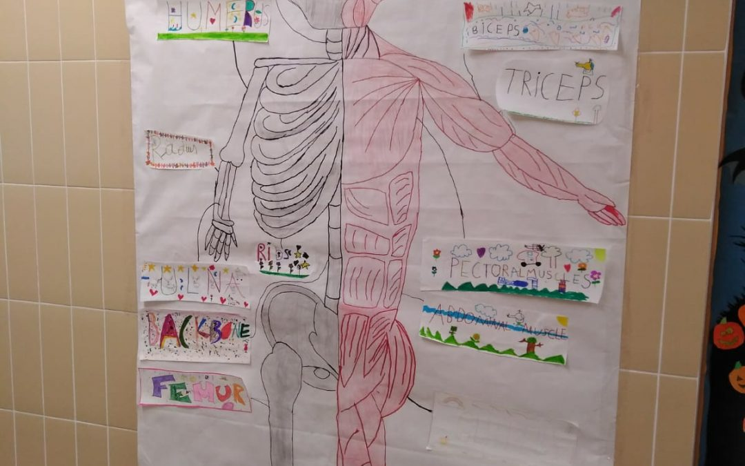Proyecto Natural Science (bones and muscles)